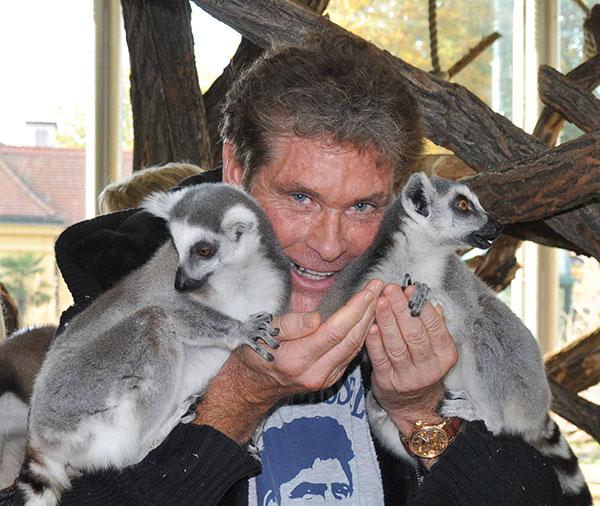 lemuros.jpg