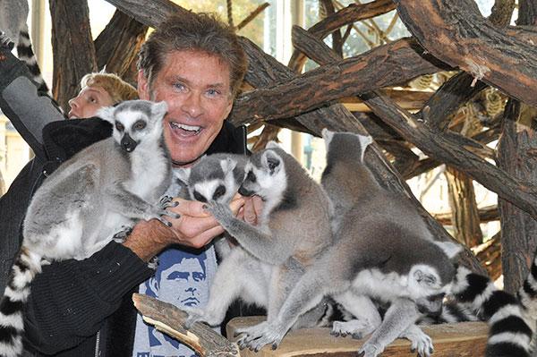 lemuros2.jpg
