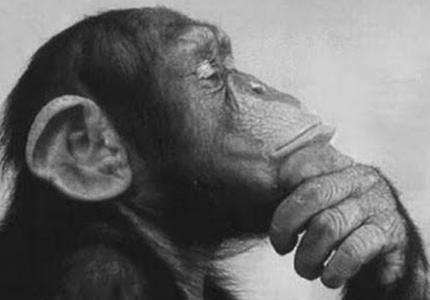 Monkey_Rodin-thinker.png
