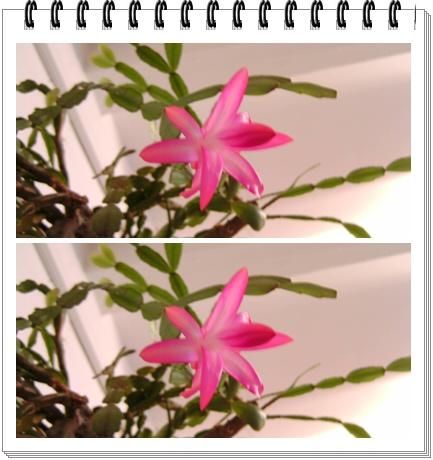kaktuszkari.jpg