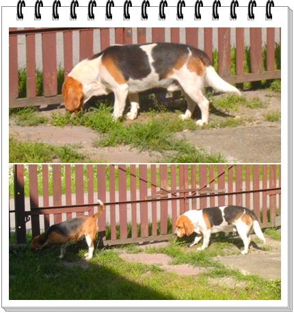 kutyak.jpg