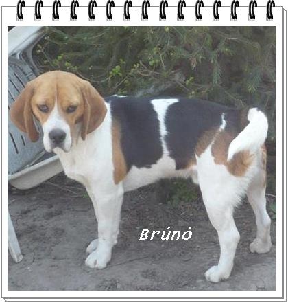 brunocic.jpg