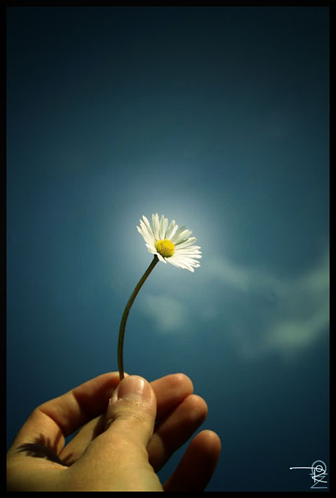 egy_száll_virág.jpg
