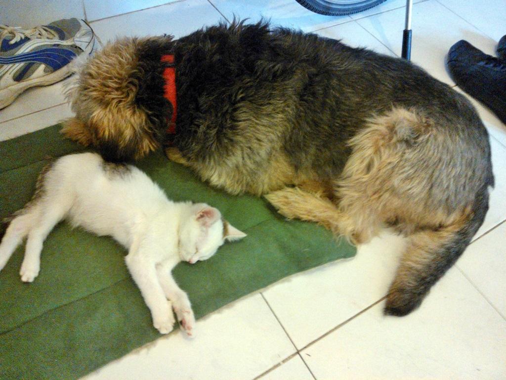 Macskagyilkos Tofu és a haverja együtt pihennek :)