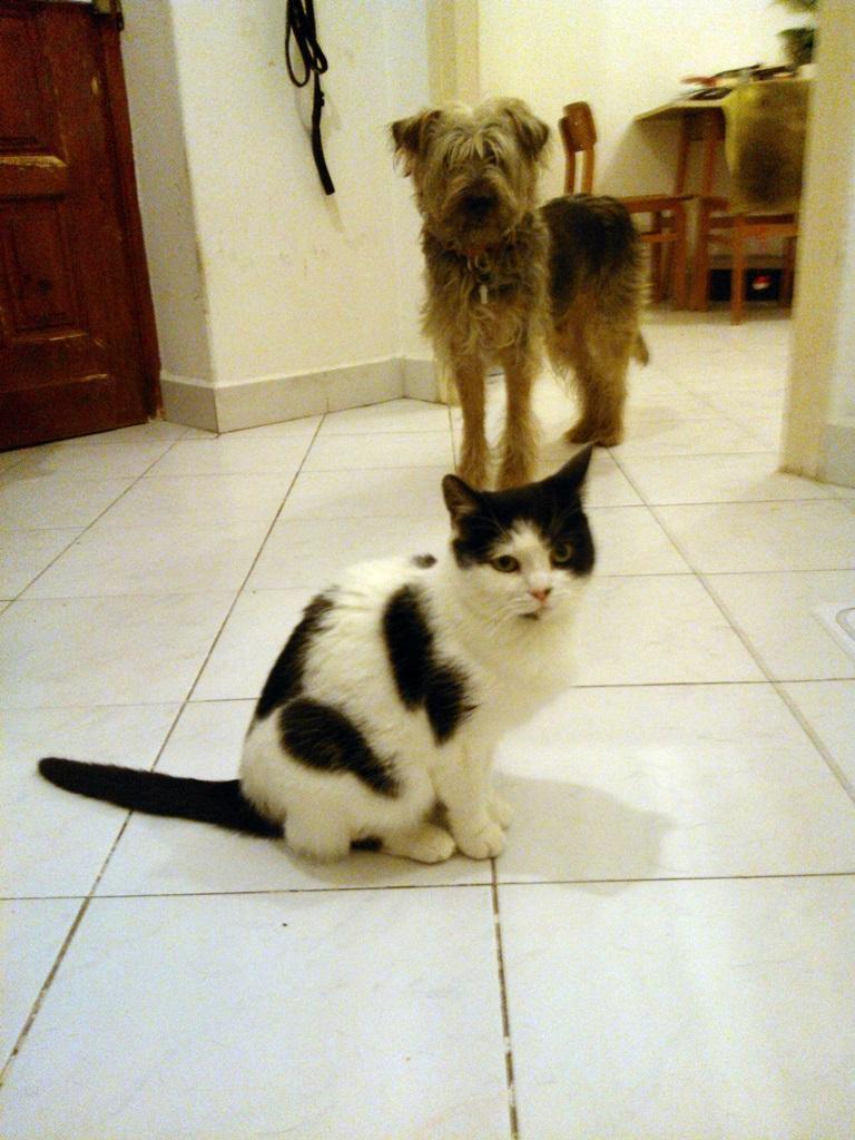 A pár napja érkezett Lutri cica, háttérben a korábbi gazánál 'macskagyilkos' Tofuval