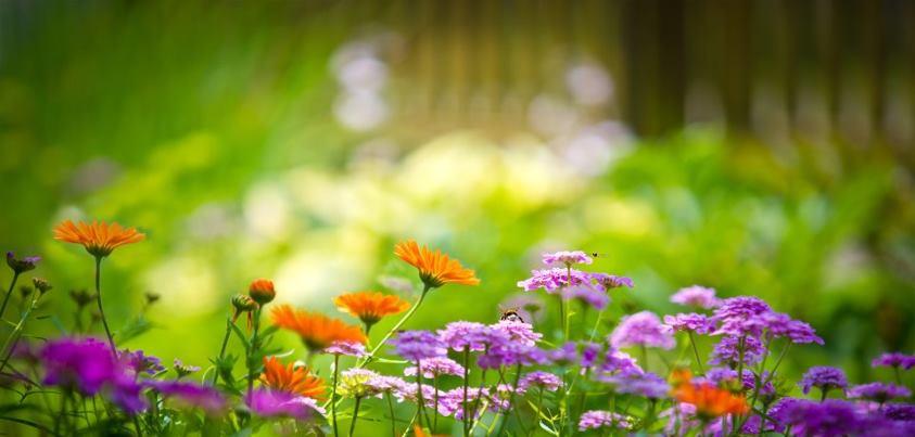 flores 3.jpg