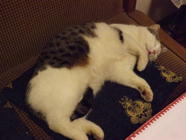 a Dönci csak alszik és alszik....