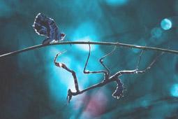 pillango imadkozo saska.jpg