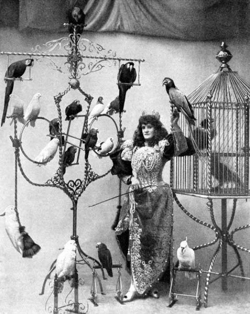 Cirkusz10.jpg