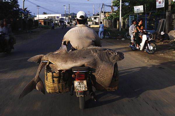 bikesofburden07.jpg