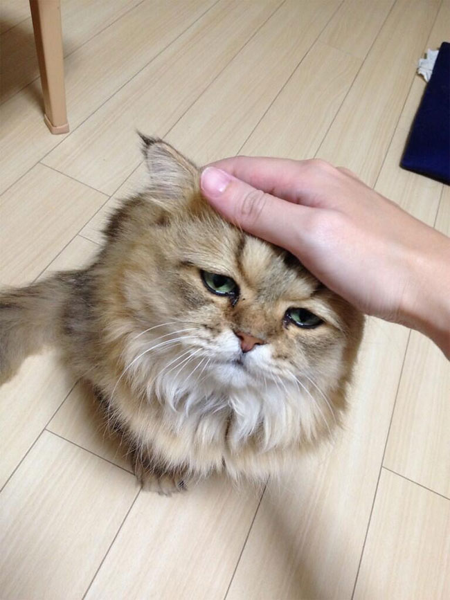 disappointed-cat-0.jpg