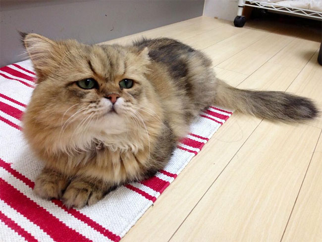 disappointed-cat-93.jpg