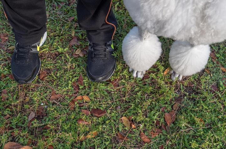 feetsandpaws03.jpg