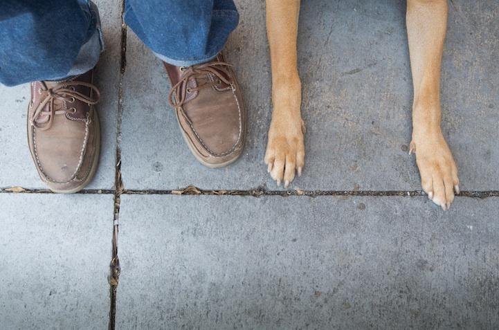 feetsandpaws12.jpg