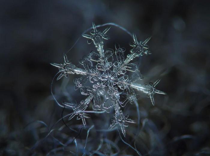 macro-photography-snowflakes-alexey-kljatov-2.jpg