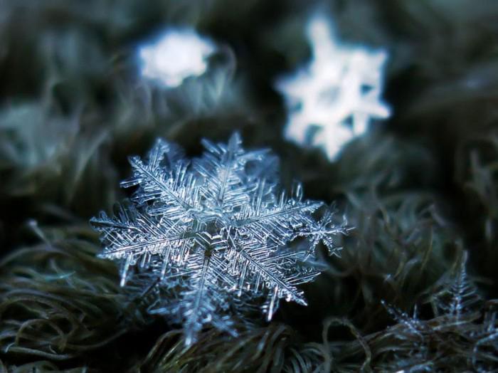 macro-photography-snowflakes-alexey-kljatov-9.jpg