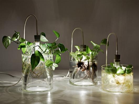 plant_lamp.jpg