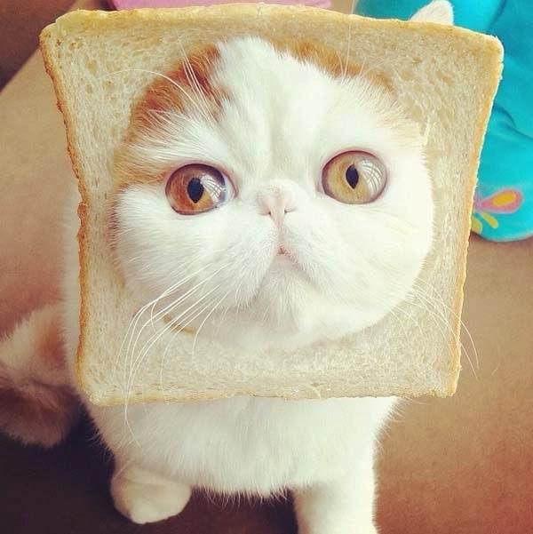 snoopybabe-cute-sad-cat-6.jpg
