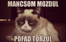 mancsom_mozdul_ask_fm.jpg