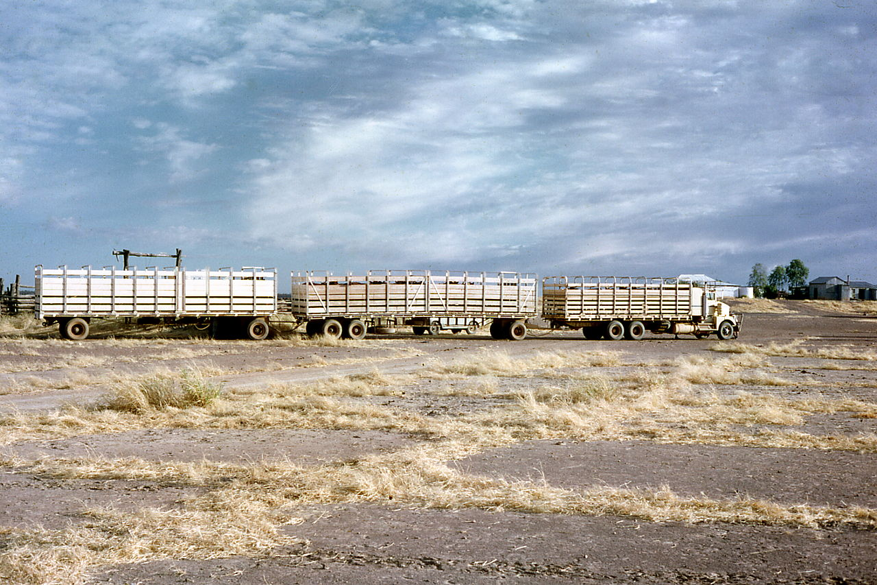 1280px-Early_Cattle_Road_Trains_at_Louisa.jpg
