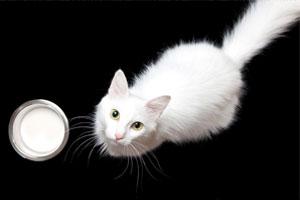 macska-tej.jpg