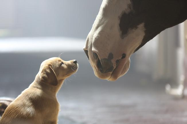 budweiser-puppy-love-hed-2014.jpg