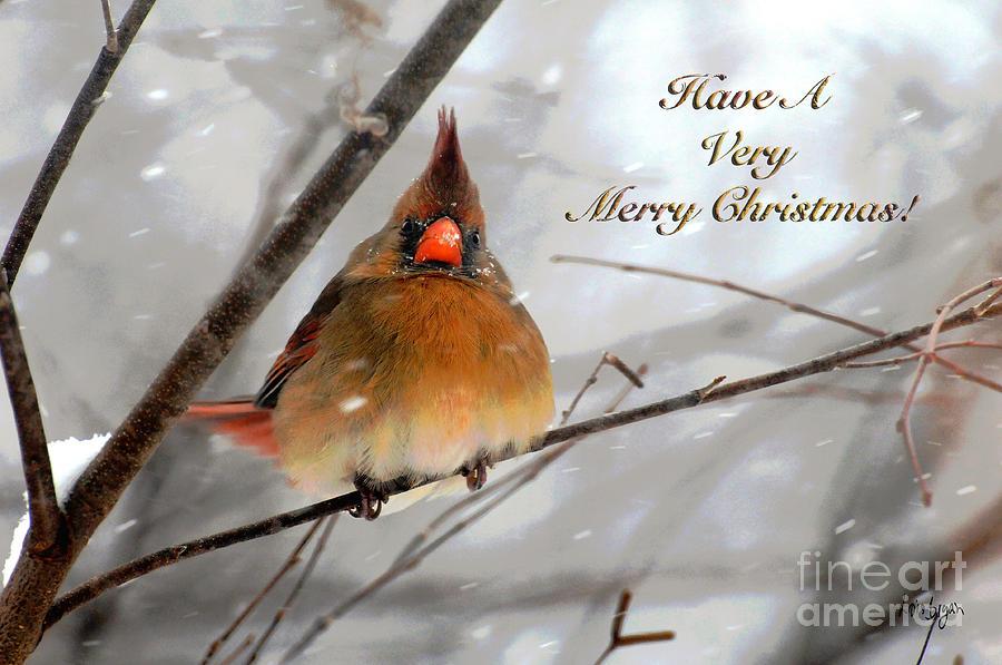 cardinal-in-snow-christmas-card-lois-bryan.jpg
