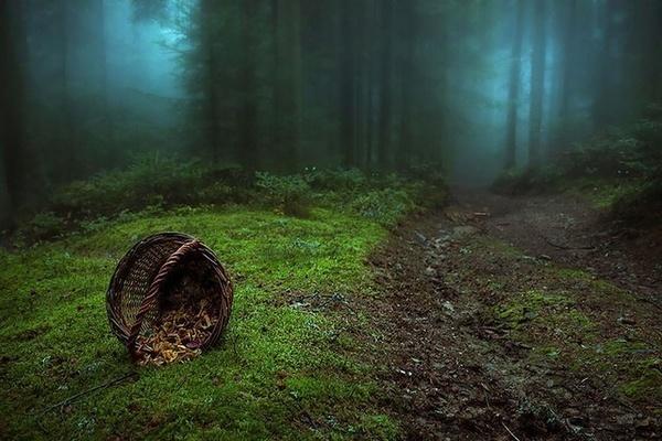 Világ erdei - 15 rejtélyes erdő, ahol szívesen elvesznénk