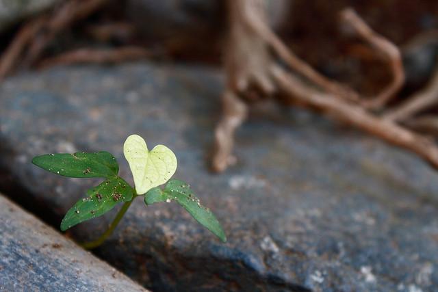 A természet szíve