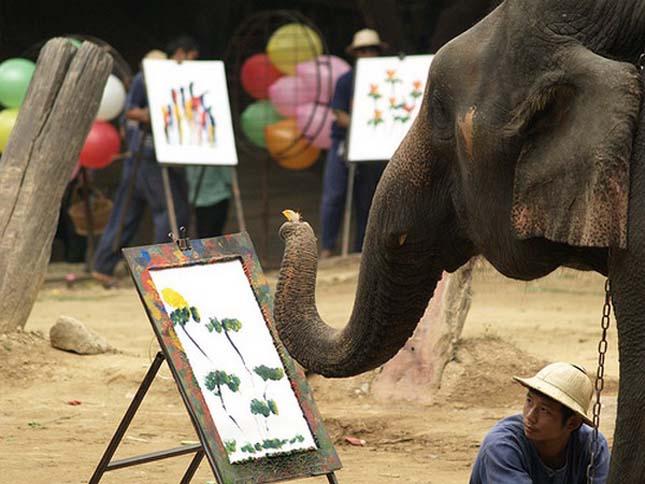 festo-elefantok-10.jpg