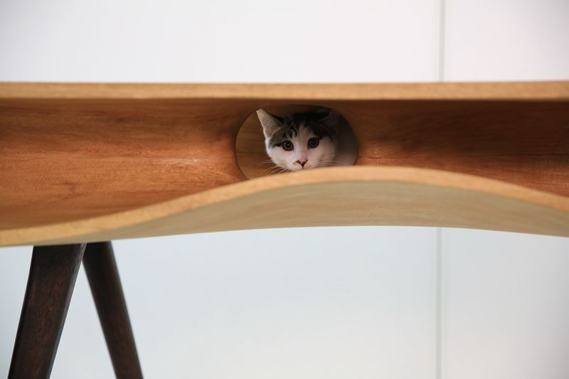 catable2.jpg