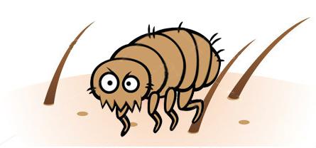 Emberi bőr paraziták atkák, Rovarok és élősködők okozta bőrbetegségek