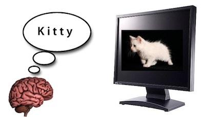 brainkitty.jpg