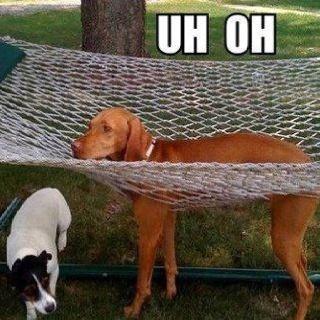 kutyák.jpg