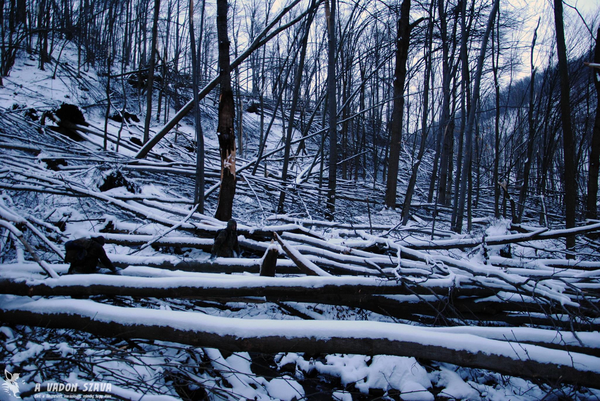 Erdei akadálypálya a Rózsás-pataknál. Itt is és sok más helyen tényleg a rönkök közt kell kúszni-mászni.