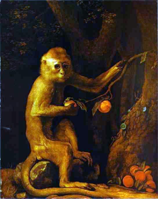 George_Stubbs-_Green_Monkey.JPG