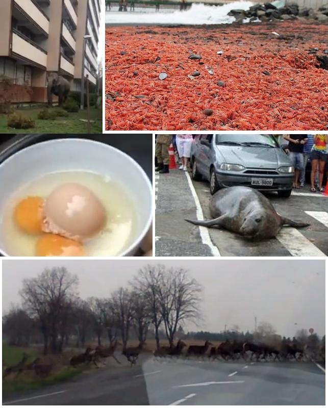 különös állatos események 2013 márciusából