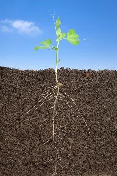 Növény termő talajon