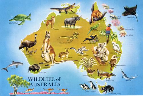 Ausztrália.jpg