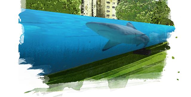 Kék cápa, Dózsa Gergő.png
