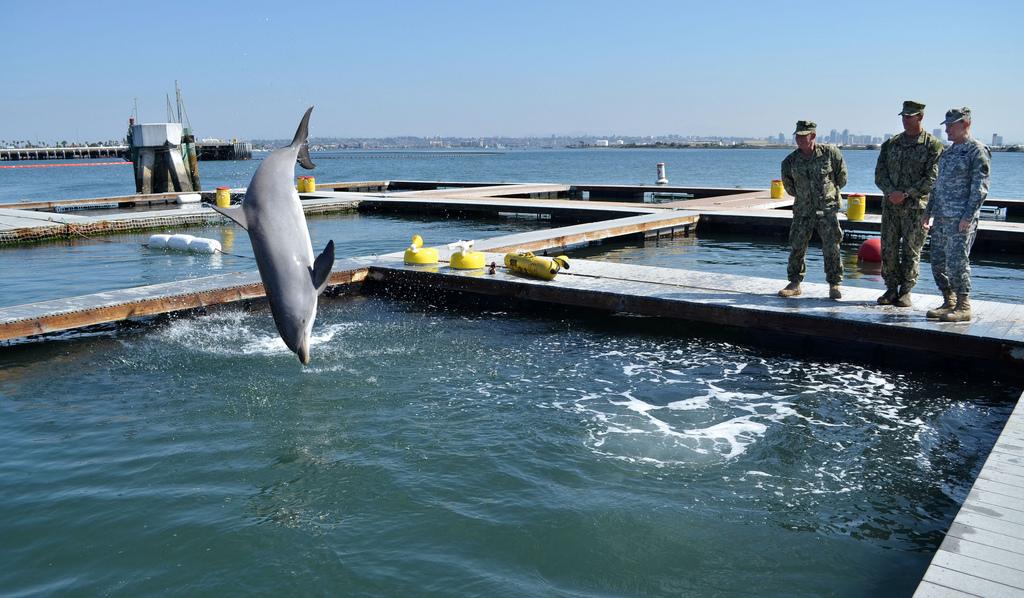 delfin2.jpg
