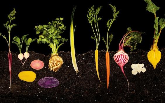 vegetable-garden2.jpg