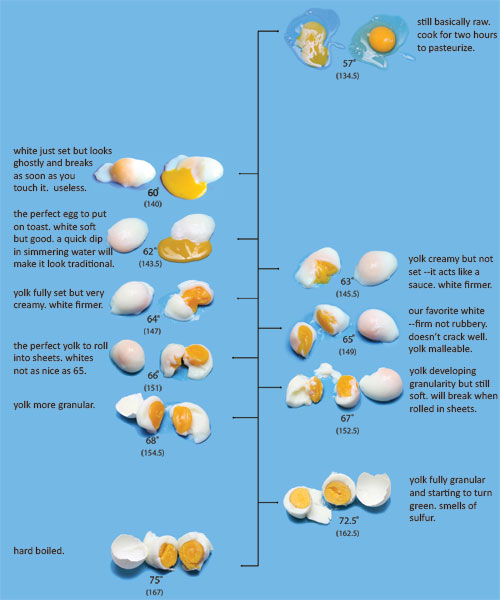 eggchart2.jpg