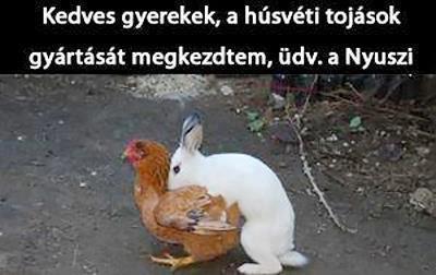 Húsvéti nyuszi.jpg