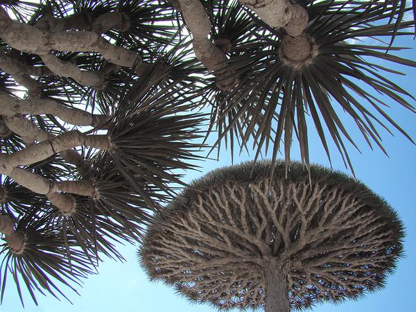 Socotra1.jpg