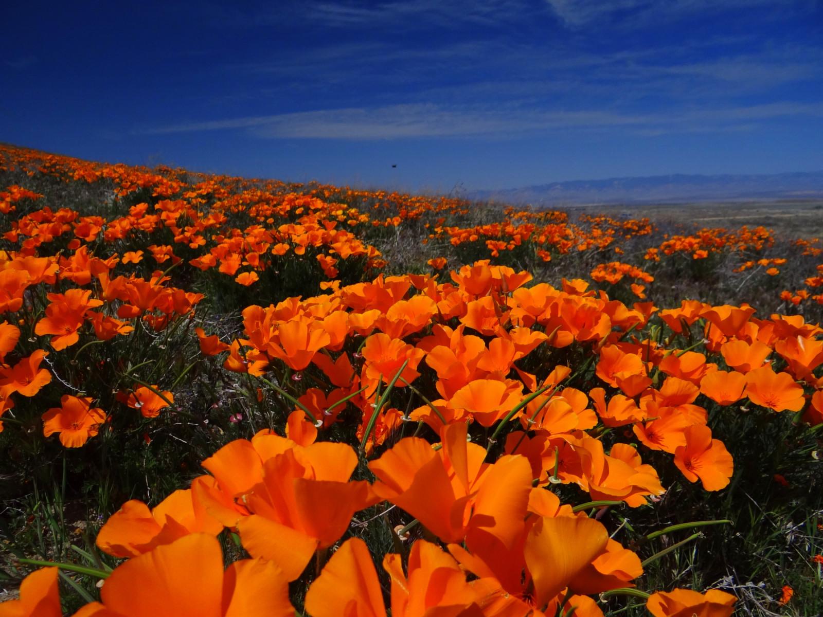 Antelope Valley.JPG