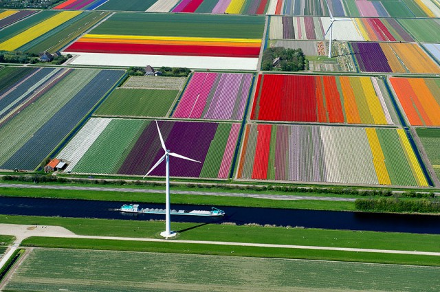 Tulip Fields.jpg