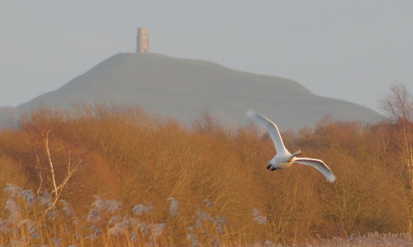 Glastonbury Tor.jpg