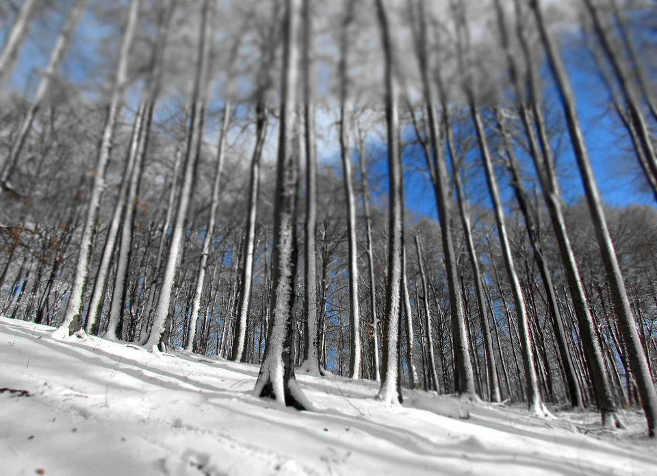 3. Téli erdő a Börzsönyben.jpg