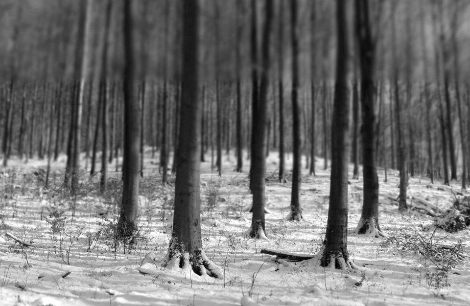 4.Téli erdő a Magas tax-nál.jpg